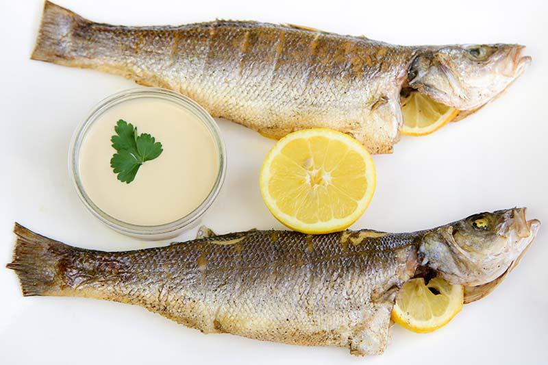 Levantine Fish